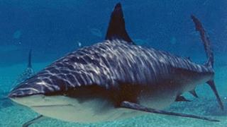 Furt inedit! A sustras un rechin dintr-un acvariu