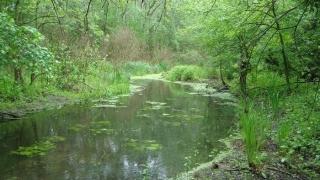 O zonă din județul Constanța, inclusă în rețeaua ecologică europeană Natura 2000