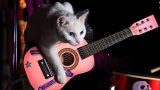 Rock on pentru ajutorarea pisicilor!