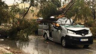 Un român a murit în Malta, după ce un copac s-a prăbuşit pe maşină