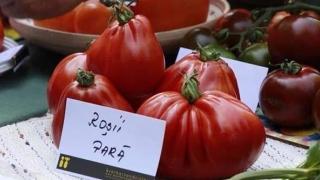 Știați că există roșii cu gust de ananas, de cireșe sau de pere?