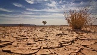 Ce maladii poate produce schimbarea climatică