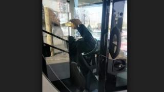 Șoferul unui autobuz, fotografiat când bea alcool la volan