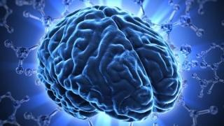 Structura creierului fiecărui individ este unică
