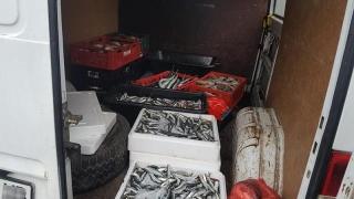 Sute de kilograme de pește, confiscate de jandarmi!