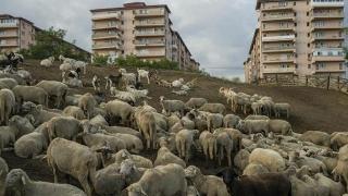 Te dai crescător de animale printre blocuri? Poți fi bun de plată!