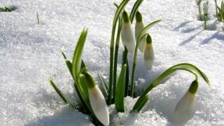 Iarnă cu temperaturi de primăvară în Dobrogea