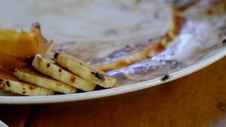 Ţi s-a aşezat o muscă pe mâncare? Hrana este contaminată!