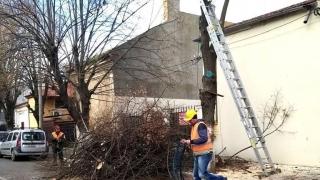 S-au reluat lucrările de toaletare și corecție a arborilor în Constanța