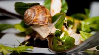 Un consumator a găsit un melc în salata comandată la restaurant