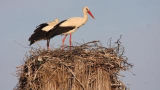 Uite barza! Enel şi Societatea Ornitologică Română încep să numere berzele din Constanţa şi Tulcea