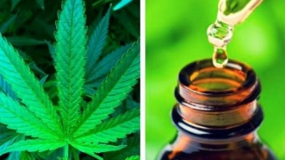 Principalele beneficii ale uleiului de cannabis