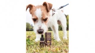 Uleiul CBD pentru câini cu cancer
