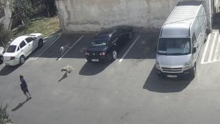 VIDEO. Un copil a fost mușcat de câini la Năvodari