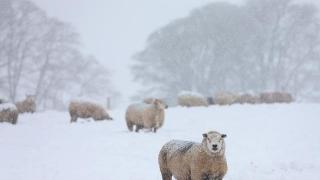 Un martie arctic: tragedie meteo şi energetică pentru Europa