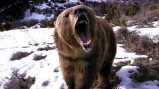 Ce spune Ministrul Mediului despre problema urşilor