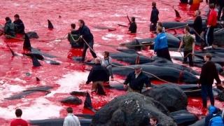 Franța deplânge decizia Japoniei de a relua vânătoarea de balene