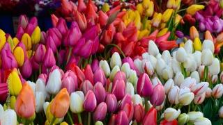 Vânzările de flori ar putea ajunge la 8 milioane de euro