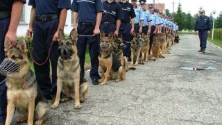 IGJR: Primul vehicul al Jandarmeriei Române special destinat transportului câinilor de serviciu