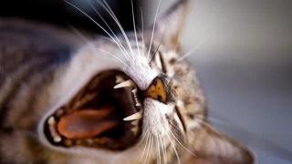 Veniți să vedeți și să ascultați mieunatul a peste 200 de pisici!