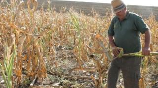 Vești bune pentru fermieri! Decizia ministrului Agriculturii