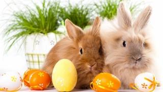 Vești bune pentru români! Patru zile libere de Paște!