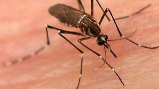 ALERTĂ! Primul deces cauzat de virusul produs de la înțepăturile de țânțari!
