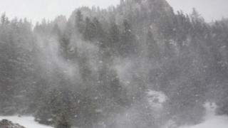 Cod galben de viscol la munte