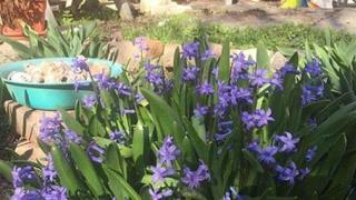 Vreme capricioasă în aprilie! Diferenţe mari de temperatură și ploi abundente
