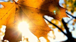 Vremea se va încălzi în Dobrogea, spre final de lună