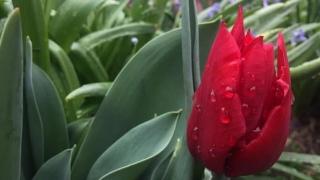 Ploi și chiar ninsori! Vreme severă în România, după două luni de secetă