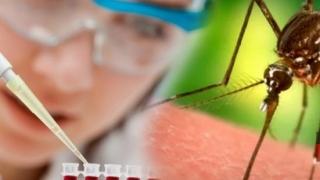 276 de cazuri de infecție cu virusul West Nile! Vezi numărul deceselor!