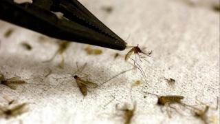 West Nile ucide! Cea mai mare incidenţă a febrei, între august şi octombrie
