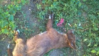 Câini și pisici uciși în Valu lui Traian! Primarul, așteptat să dea răspunsuri!