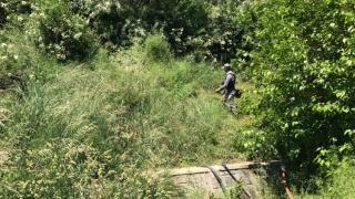 Municipalitatea continuă lucrările de întreținere a spațiilor verzi din Constanța