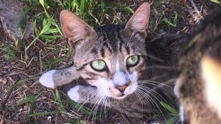 Ziua internaţională a pisicii! Sărbătorirea celui mai popular animal de companie