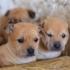 Voluntari nemți îngrijesc de Sărbători câinii din Adăpostul pentru Animale