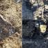 Deşeuri animale descoperite îngropate pe un teren viran în judeţul Tulcea