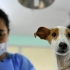 Câinii din Constanța vor fi sterilizați gratuit? Vezi cine a venit cu ideea