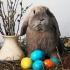 De unde a apărut iepurașul de Paște