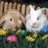 Surprinde-ți prietenii cu cele mai deosebite mesaje de Paște!