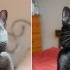 """O organizație caritabilă caută proprietar pentru o pisică """"absolut nemernică"""""""