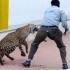 Un leopard a rănit șase persoane într-o școală din India