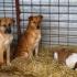 Se reia programul cu publicul la Adăpostul pentru animale abandonate