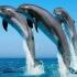 Adoptă un delfin!