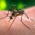 Florida se confruntă cu primele cazuri de infecție cu virusul Zika