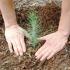 Agricultori, puteţi accesa bani pentru împăduriri!