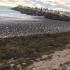 6.300 de tone de alge, colectate, vara aceasta, pe litoral