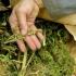 Cetăţean britanic, arestat la domiciliu, în România pentru cultivare şi trafic de droguri