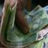 Ce se întâmplă cu pensiile românilor de luna viitoare
